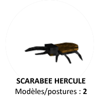 FormatAnimal-Scarabee-a.png.c8acd6594ada0d7bd13f35da2726a81e.png